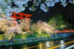 Sakura och torii Arkivbild