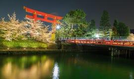 Sakura och torii Arkivbilder