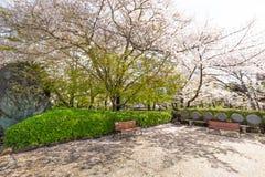 Sakura okwitnięcia kwiatu park z drogą przemian publicznie Obrazy Royalty Free
