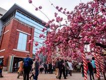Sakura okwitnięcie przy Osaka, Japonia 3 Zdjęcia Royalty Free