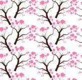 Sakura okwitnięcia drzewo Royalty Ilustracja