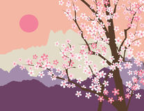 Sakura okwitnięcie Zdjęcia Stock