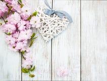 Sakura okwitnięcie z sercem Fotografia Stock