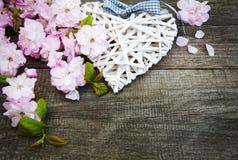 Sakura okwitnięcie z sercem Obrazy Royalty Free