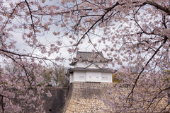 Sakura Osaka Castle, beautiful. Royalty Free Stock Image