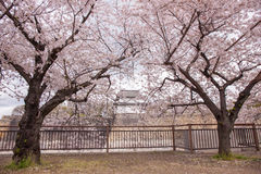 Sakura Osaka Castle, beautiful. Stock Images