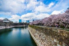 Sakura. Osaka Castle cherry blossom under the sun Royalty Free Stock Photography