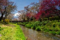 Sakura at Oshino Hakkai and mount Fuji. Spring sakura or cherry blossom along canal and bridge at Oshino Hakkai village with Mount Fuji or Fujisan view Stock Images