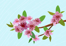 Sakura, paesaggio Immagini Stock