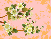 Sakura, paesaggio Fotografia Stock