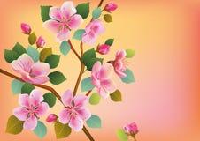 Sakura, paesaggio Fotografie Stock Libere da Diritti