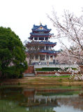 Sakura Park Royalty Free Stock Photography