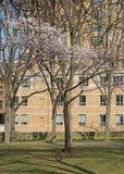 Sakura park jest jawnym parkiem Ja oryginalnie dzwonił Claremont Parkowy ale przemianowywał w 1912, fotografia stock