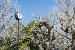 Sakura park in summer Royalty Free Stock Photography