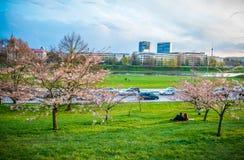 Sakura park in Vilnius Stock Image