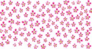 Sakura pattern Stock Image