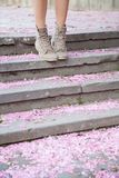 Sakura petals on the ground Royalty Free Stock Image