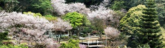 Sakura postcard . menu. Stock Photography