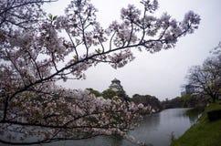 sakura przy Osaka kasztelem Fotografia Royalty Free