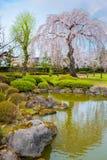 Sakura que llora en el jardín japonés conmemorativo de Fujita en Hirosaki, Japón fotografía de archivo
