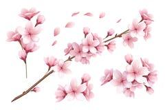 Sakura Realistic Set royalty free illustration