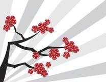 Sakura red on grey stripes royalty free stock photo