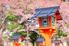Sakura with red lantern Royalty Free Stock Photography