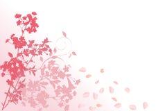Sakura rosado con los pétalos que caen Fotos de archivo libres de regalías