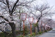 Sakura säsong i Kyoto Arkivbilder