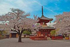 Sakura saison στο ναό Στοκ εικόνα με δικαίωμα ελεύθερης χρήσης