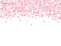 Sakura Sakura-de lente royalty-vrije illustratie