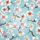 Sakura seamless pattern stock photos