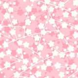 Sakura seamless pattern Royalty Free Stock Photo
