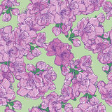 Sakura seamless pattern. Cherry blossom, sakura seamless pattern. Floral vector background Royalty Free Stock Photo