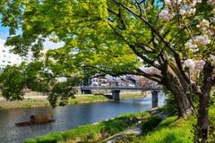 Sakura seaskon w Japonia obrazy stock