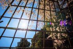 Sakura seaskon w Japonia zdjęcie stock