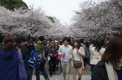 Sakura Season en el parque de Ueno Fotografía de archivo libre de regalías