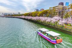 Sakura Season en Sightseeingsreis in Osaka Japan stock fotografie