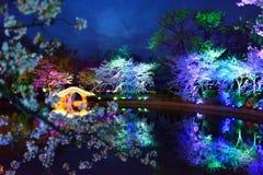 Sakura Season Fantasy stock images