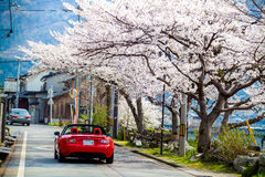 Sakura season in Japan Stock Photography