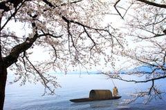 Sakura season in Japan Royalty Free Stock Images