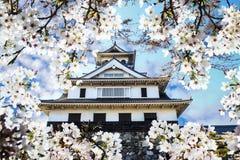 Sakura season, Kyoto, Japan Royalty Free Stock Images