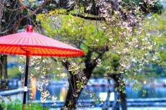 Sakura season, Kyoto, Japan Royalty Free Stock Photos