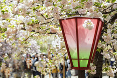 Sakura season in Kyoto, Japan Stock Images