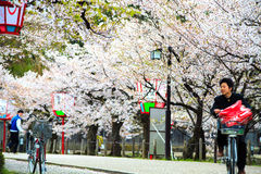 Sakura season in Kyoto, Japan Royalty Free Stock Photography