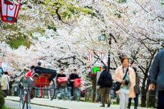 Sakura season in Kyoto, Japan Royalty Free Stock Image