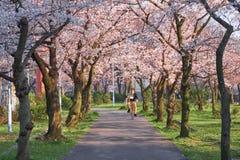 Sakura season osaka stock image