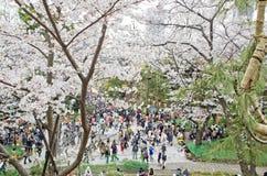 Sakura season in Ueno park , Japan. Royalty Free Stock Photos