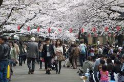 Sakura Season in Ueno Park Royalty Free Stock Photography