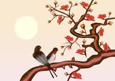 Sakura Sera nella ciliegia e negli uccelli di fioritura del giardino Fotografia Stock